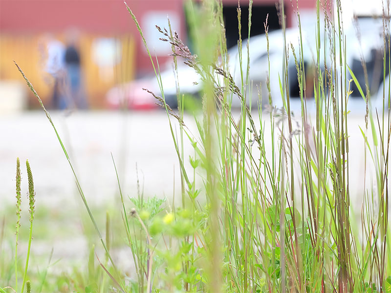 Gräs på gården